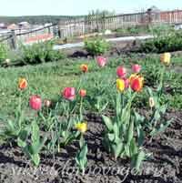 календарь садовода май
