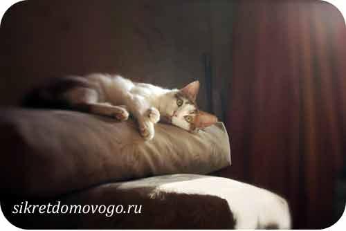 мой любимый котик 8