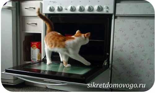 мой любимый котик3