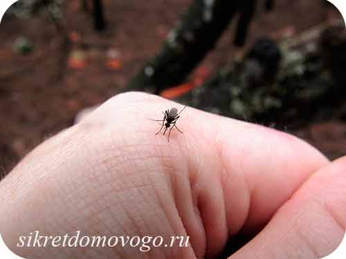 комар на руке