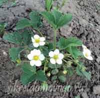 календарь садовода май 3