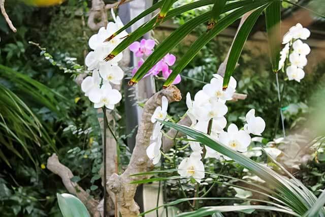 Орхидеи в природе