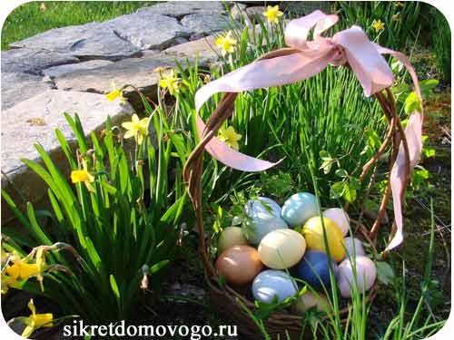 нарциссы и крашеные яйца