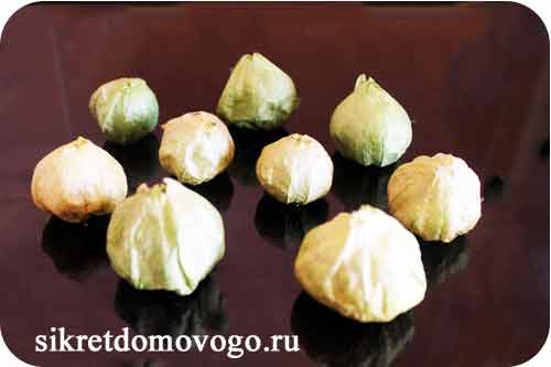 плоды физалиса овощного