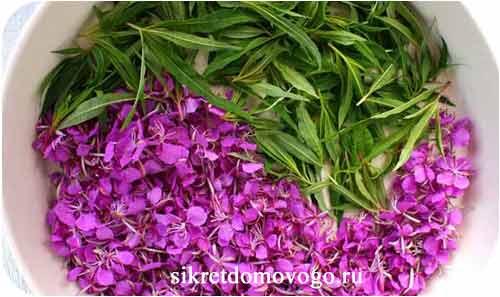 цветы и листья кипрея