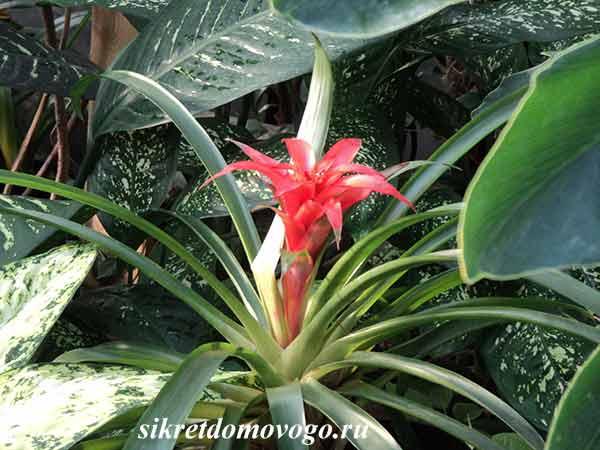 Прогулка по оранжереям Ботанического сада
